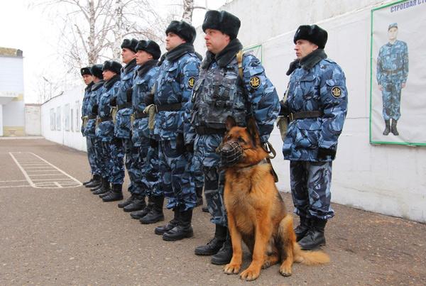 dog-30