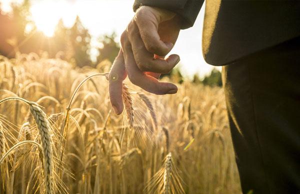Сельхозпроизводители Татарстана стали менее заключать страховых договоров сгосподдержкой