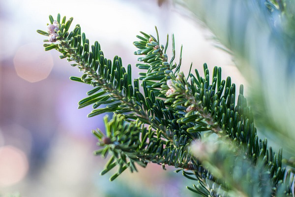 Впреддверии Нового года вТатарстане усилят патрулирование лесов