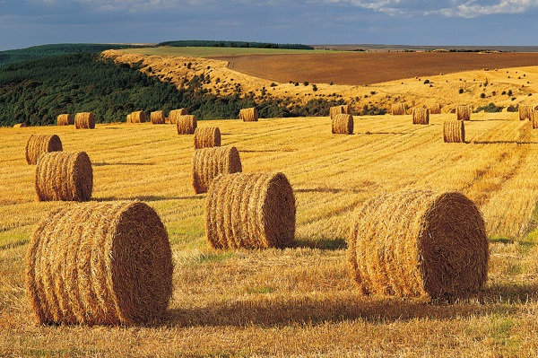 ws_Harvest_Field_Hay_Bales_Forest_1920x1200