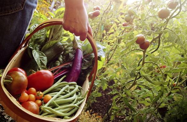 Применение цеолита позволит сохранить урожай
