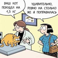 карикатура диета