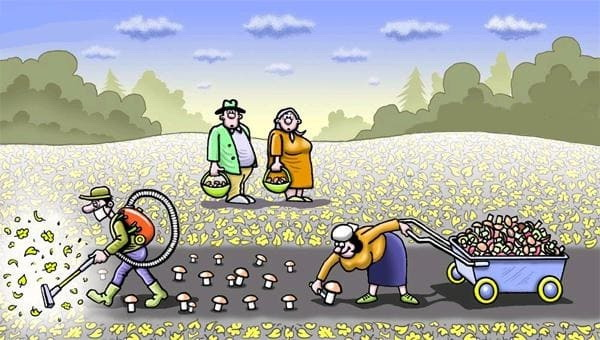 карикатура грибы