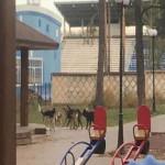 собаки бегают по детским площадкам