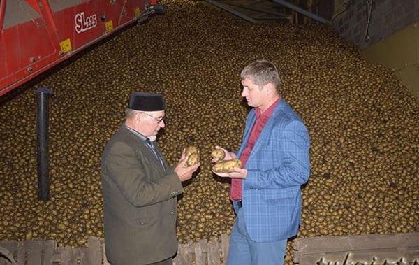 в Тукаевском районе с 65 гектаров накопали 2350 тонн картофеля
