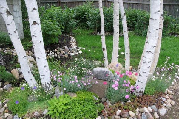 березы-на садовом участке