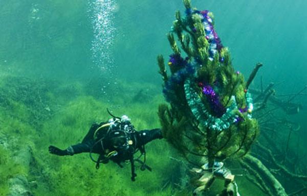 елка-на-дне-голубого-озера