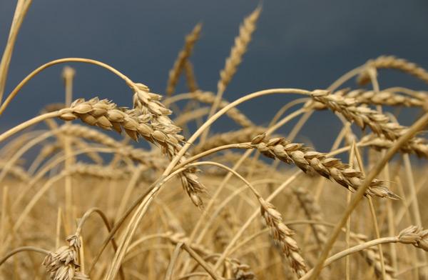 семеноводческое-хозяйство