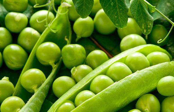 Специалисты ТатНИИСХ создали сорт гороха с высоким содержанием белка