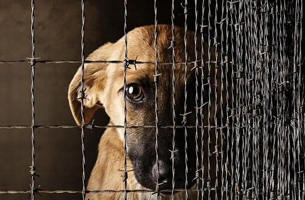 вынесен приговор убийце собаки