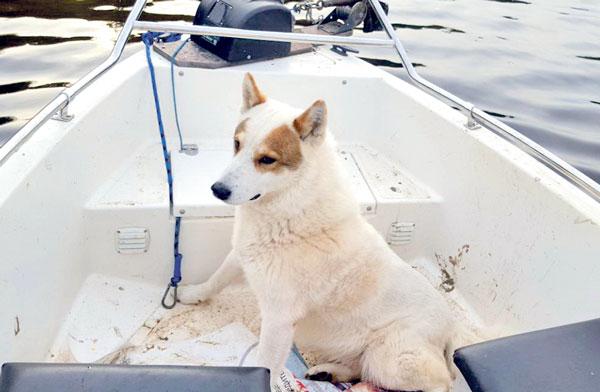 собака-в-лодке