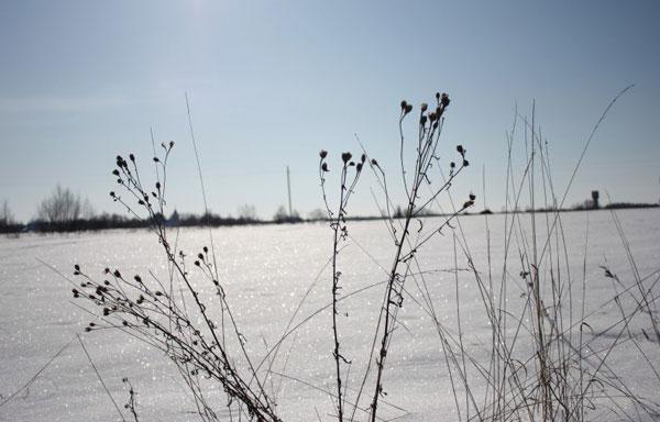 зимовка-растений