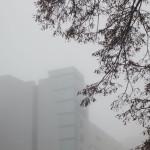 Туман_A8G9464