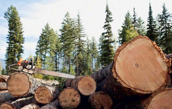 незаконная-рубка-леса