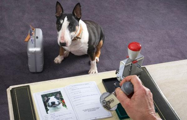 документы-на-собаку
