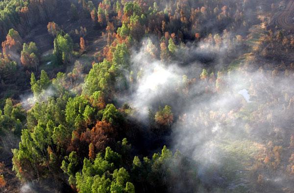 лесные-пожары