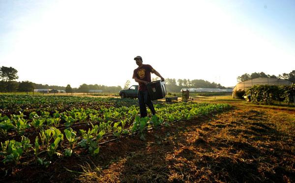 застраховать-урожай