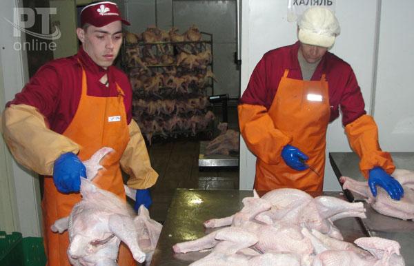 Производство-мяса-индейки
