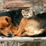 бездомные-животные