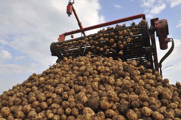уборка-картофеля