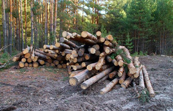 вырубка-деревьев