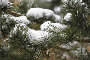 Погода_снег_елка_A8G4479