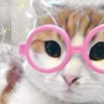 Кошка-в-очках