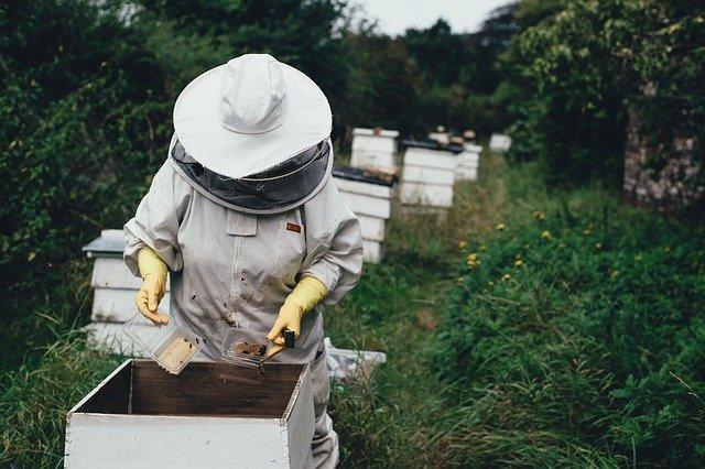 apiary-1866740_640