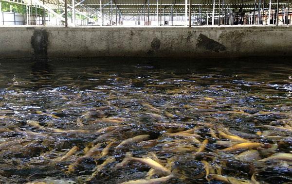 рыбная-ферма