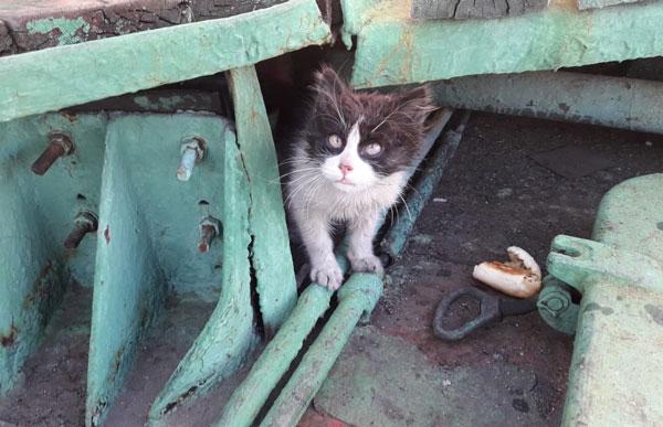 кот-васька