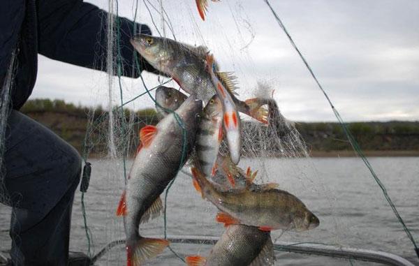 ловля-рыбы