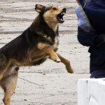 набросилась-собака