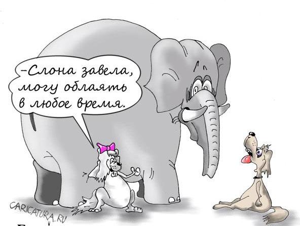 карикатура-моська