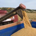 урожай-зерновых