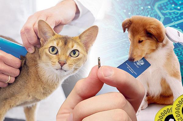 чипирование-животных