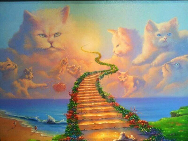 1-кошки