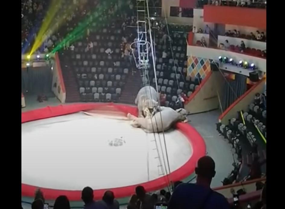 1-слон