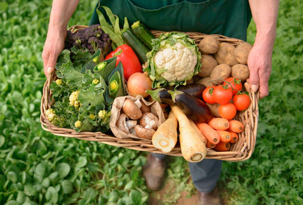 заниматься-органическим-земледелием